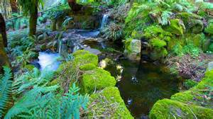 Royal Botanic Gardens Hobart Royal Tasmanian Botanical Gardens In Hobart Tasmania Expedia