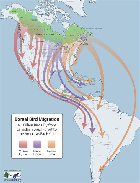 waterfowl migration map a dc birding boreal habitats and birds at risk