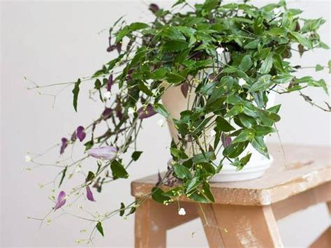 indoor plants nz how to keep indoor plants alive viva