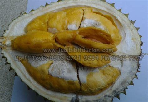Bibit Durian Bawor Bandung bibit durian montong bibit durian unggul durian durian