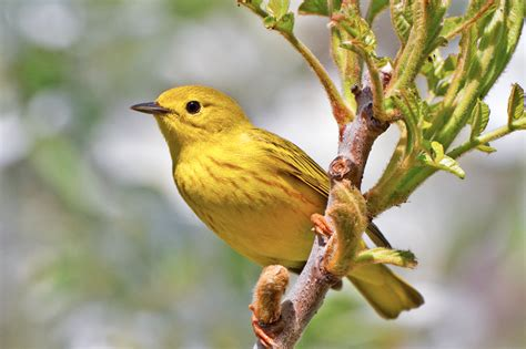 four birding trails and sanctuaries to visit in michigan