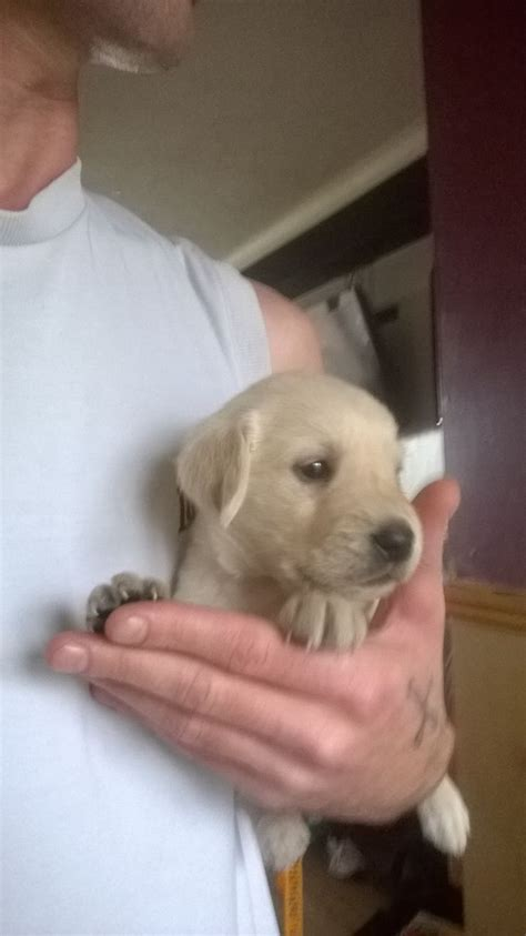 puppies for sale in east puppies for sale hastings east sussex pets4homes