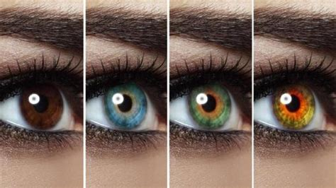 types of eye colors types of eye colors proprofs quiz