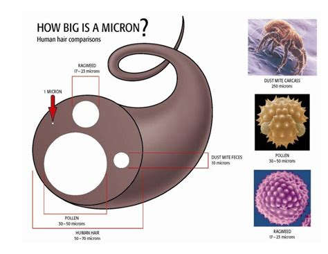 How Is A how big is a micron
