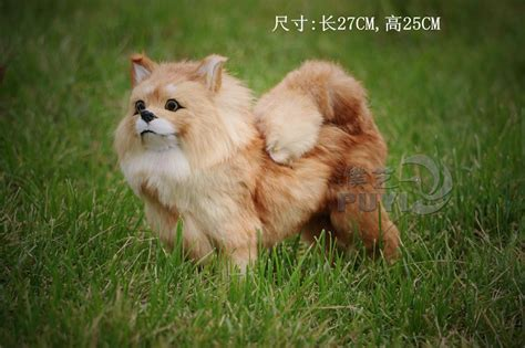 real pomeranian compare prices on pomeranian shopping buy low price pomeranian at