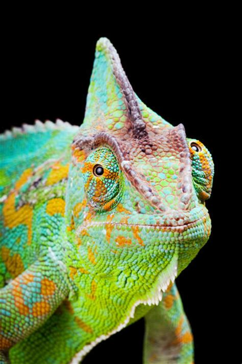 warning coloration opinions on animal coloration