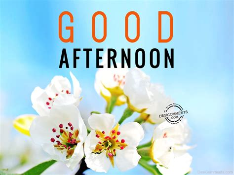 a day afternoon afternoon pictures images graphics for whatsapp page 45