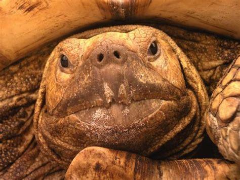 imagenes sorprendentes de natgeo fotos national geographic de animales