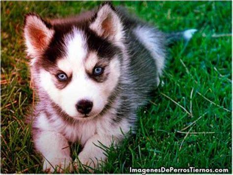 imagenes de animales juguetones hermosos fondos de pantalla de perritos tiernos y