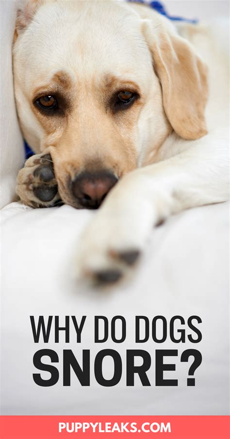 why do puppies your why do dogs snore