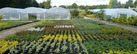 Garden Of Wholesale Springhill Nurseries Garden Centres Nurseries Near