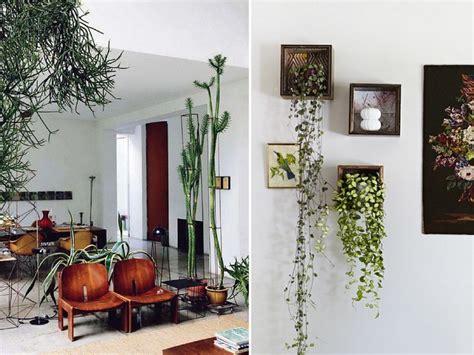 edera da appartamento piante da interno alcune idee per disporle in modo