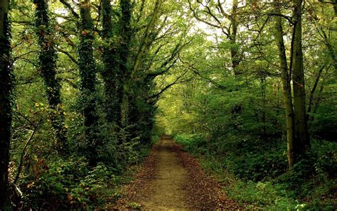 O Jpg Nature Path In Woods Picture Nr 32438