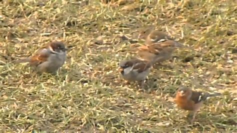 birds eating seeds youtube