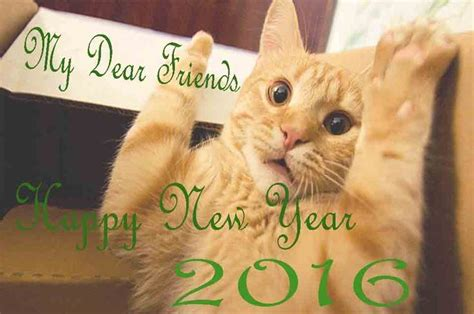 happy new years from the cat pictures photos and