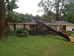 Homeowners Insurance Coverage For Tree Damage Petruzelo Ct Insurance Blog