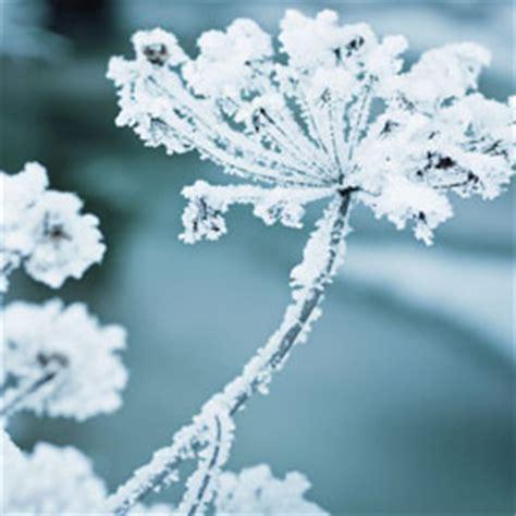 Garten Winterfest Machen Lavendel by Winterbl 252 Hingucker Im Winterlichen Garten