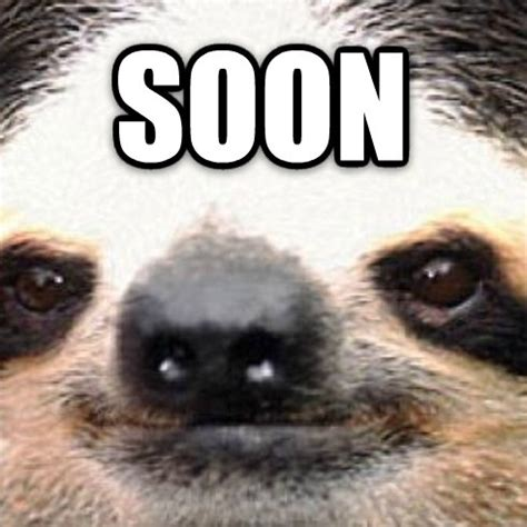 Meme Soon - jimmyfungus com the best of sloths the best collection