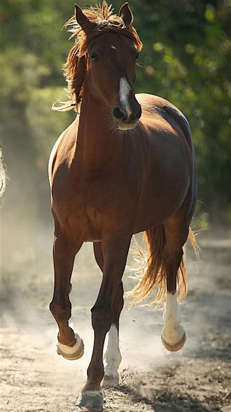wallpaper for iphone horse brown horse iphone 6 wallpapers hd