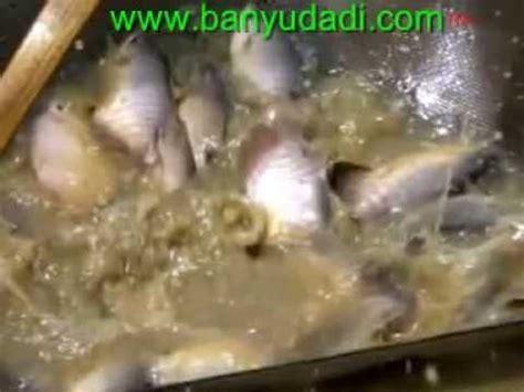 Bibit Ikan Nila Temanggung cara praktis budidaya benih lele dumbo doovi
