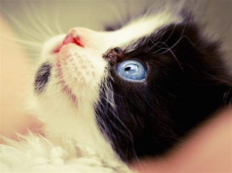 Cat Stares At Ceiling by Cat Staring Up Wallpaper Free Cat