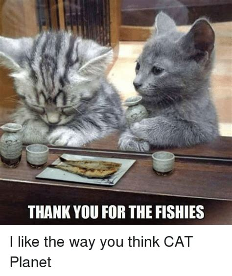 Thinking Cat Meme - 25 best memes about thinking cat thinking cat memes