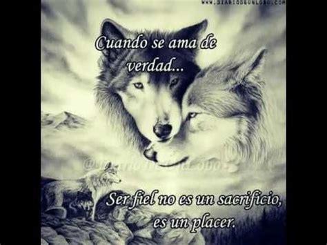 imagenes con frases de amor con lobos m 225 s de 25 ideas fant 225 sticas sobre pareja de lobos en