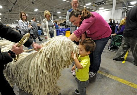 benched dog show chauncey s kissing booth middle atlantic states komondor
