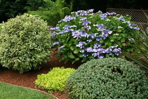 types of landscaping best types of shrubs for landscaping designs photos