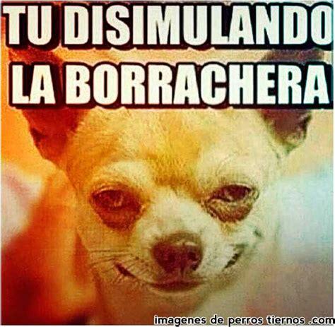 imagenes para whatsapp adultos gratis fotos chistosas de perritos para morirse de la risa