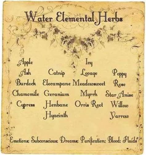the chosen witch the coven elemental magic books water elemental herbs witches of the craft 174
