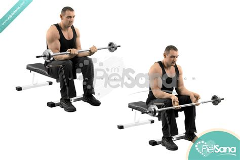 Barbel Curl seated barbell wrist curl