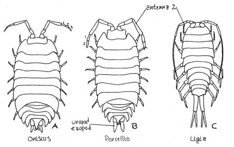 pillbug diagram free coloring pages of sharkboy and lava