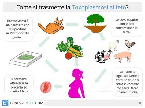 alimenti da evitare gravidanza toxoplasmosi in gravidanza rischi prevenzione e cibi da