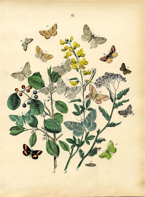 instant art printable  bohemian butterflies