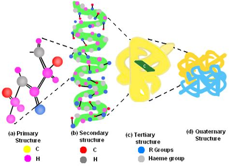 m protein definition protein structure secondary alpha helical conformation