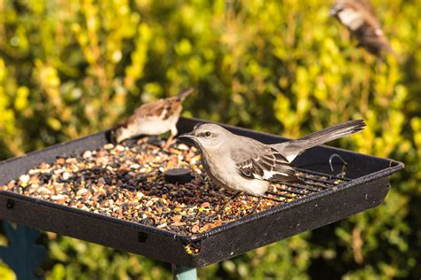images of bird feeders what to feed what can you feed
