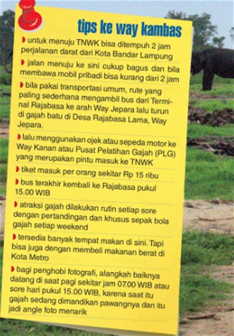 tips wisata  taman nasional  kambas lampung cari