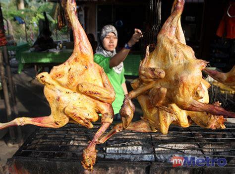 Bibit Ayam Negri kung ayam ayam kung asli foto 2017