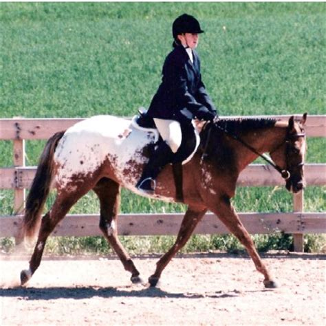 cavallo seduto il canter e il galoppo