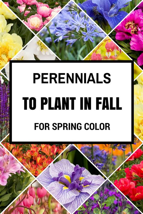 garden resources and trends fall blooming perennials perennials to plant in fall for spring color gardening
