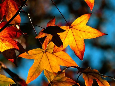 google images fall leaves colors of fall wallpapers hd wallpapers id 6258