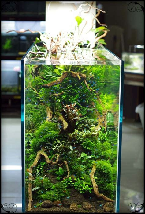 Aquascaping Supplies by 13394 Best Aquascape Images On Fish Tanks