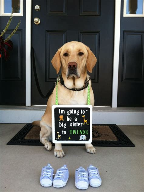 pregnancy announcements with dogs announcement w family balduino babies announcement