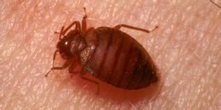 bed bug lawyer when do you need a lawyer for bedbugs understanding