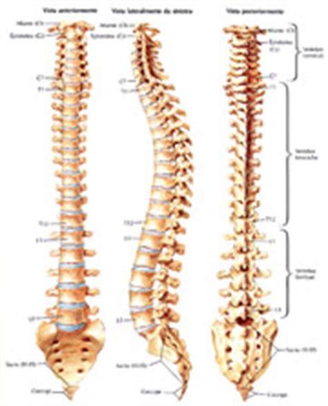 al coccige stando seduti osteosalus patologie
