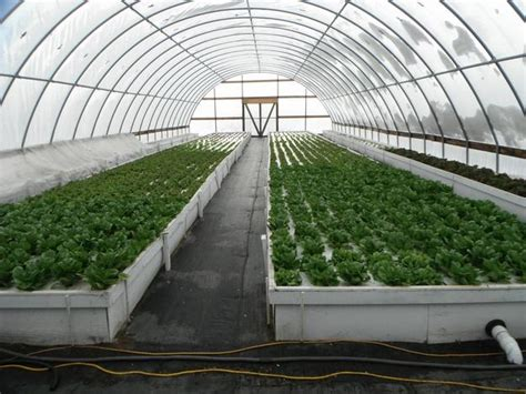 sle business plan greenhouse aquaponic personal intensive friendly aquaponics