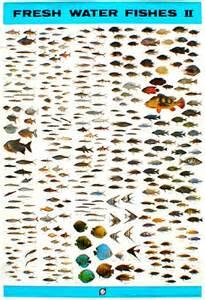 Tropical Freshwater Aquarium Fish List freshwater aquarium fish list