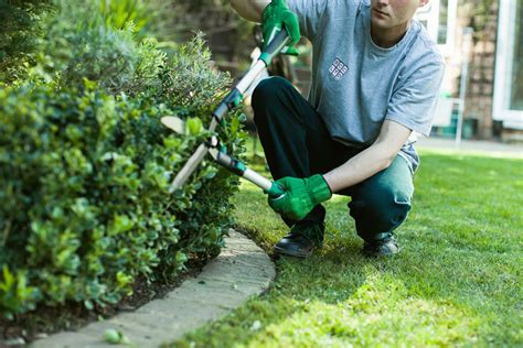 Gardening Services Vipul India Tech And Allied Services