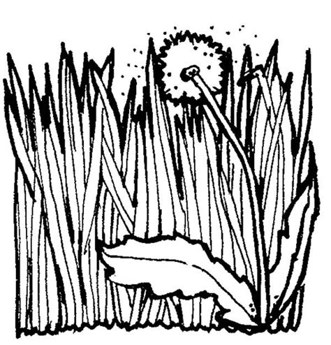 coloring page grass grass coloring page coloring pages ideas reviews